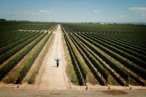 Charlie_vineyard_landscape