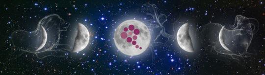 fazy księżyca i wina biodynamiczne